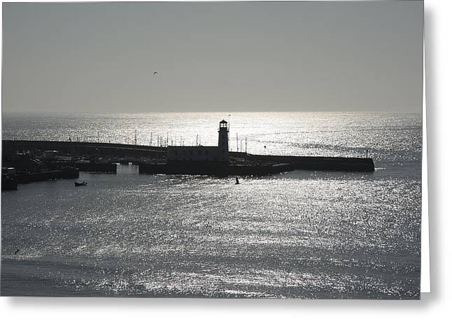 Bird Scape Greeting Cards - Scarborough Bay Greeting Card by Svetlana Sewell