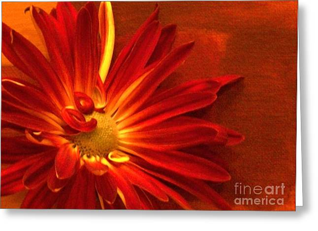 Floral Photos Greeting Cards - Scarlet Greeting Card by Marsha Heiken