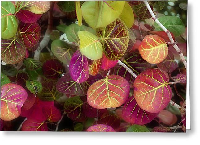 Grape Leaf Greeting Cards - Sea Grape Greeting Card by Joseph G Holland