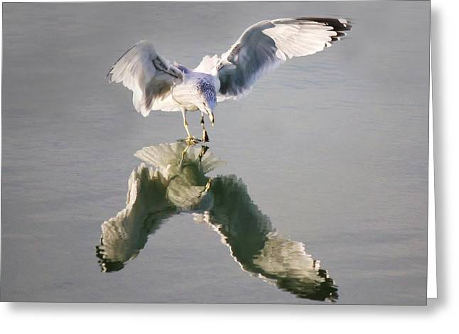 Sea Gull Reflection Greeting Card by Paulette Thomas