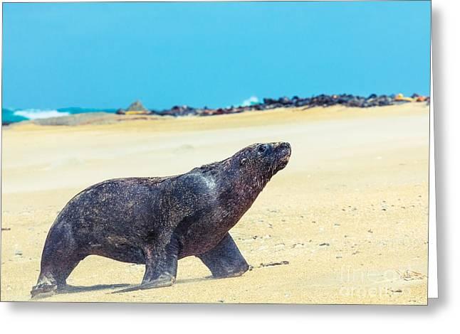 Sea Lion Greeting Card by MotHaiBaPhoto Prints