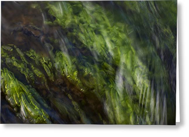Sea Weed Greeting Card by Michael Mogensen