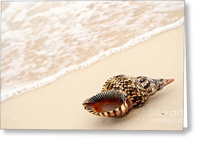 Ashore Greeting Cards - Seashell and ocean wave Greeting Card by Elena Elisseeva