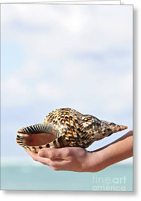 Offers Greeting Cards - Seashell in hand Greeting Card by Elena Elisseeva