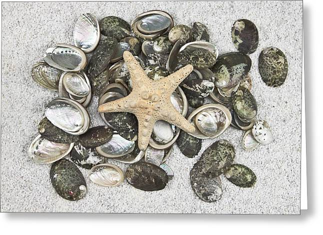 Sand Pattern Greeting Cards - Seashells Greeting Card by Joana Kruse