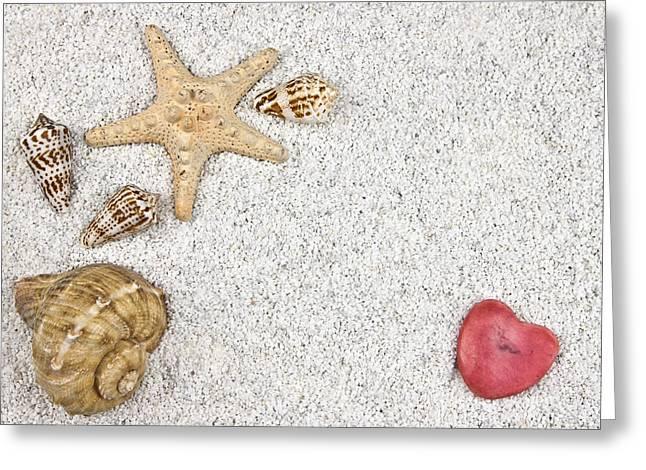 seastar and shells Greeting Card by Joana Kruse