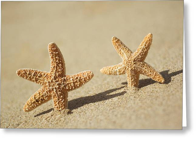 Asteroidea Greeting Cards - Seastars on Beach Greeting Card by Mary Van de Ven - Printscapes