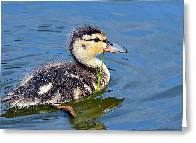 Ducklings Greeting Cards - Security Blanket Greeting Card by Fraida Gutovich