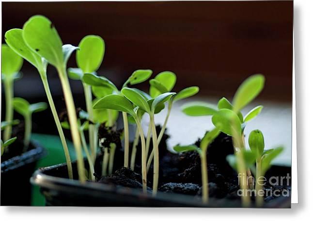 Seeding Shoots Greeting Card by Sami Sarkis