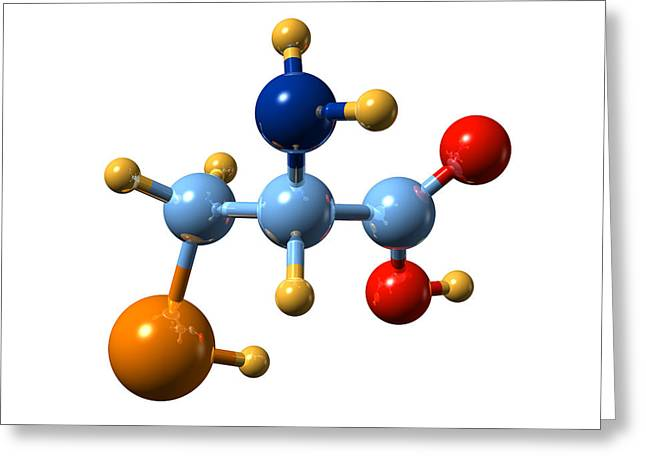 Essential Greeting Cards - Selenocysteine, Molecular Model Greeting Card by Dr Mark J. Winter