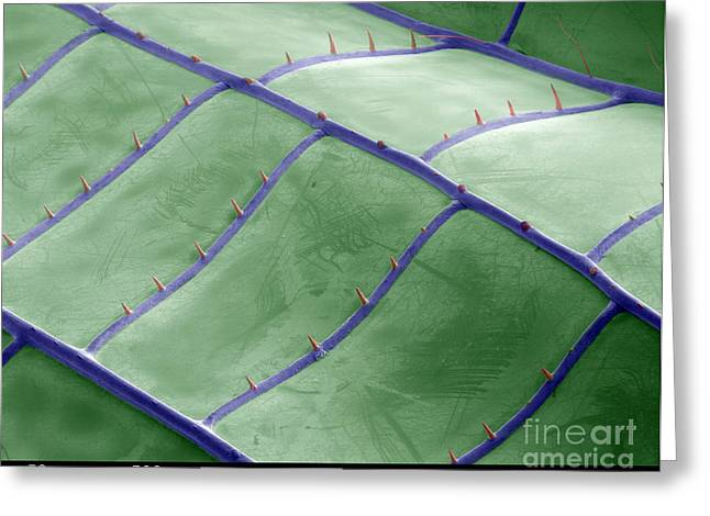 Green Darner Dragonflies Greeting Cards - Sem Of Dragonfly Wing Greeting Card by Ted Kinsman