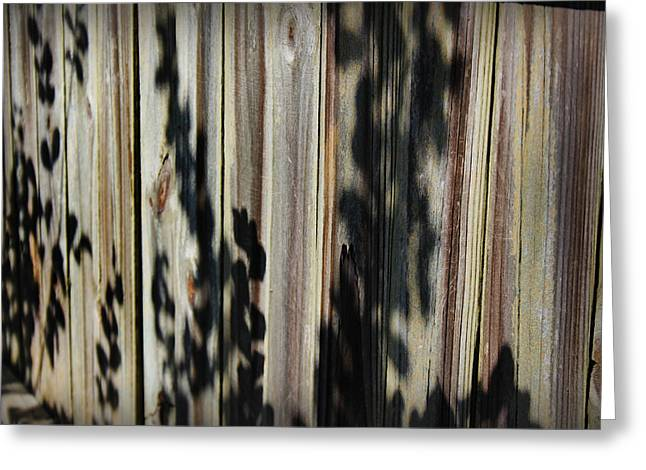 Botanical Greeting Cards - Shadows and Textures I Greeting Card by Kelly Hazel