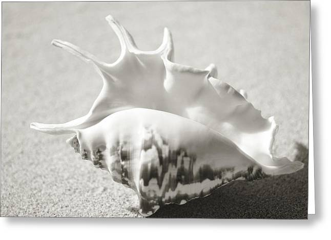 Aquatic Greeting Cards - Shell on Beach Greeting Card by Mary Van de Ven - Printscapes