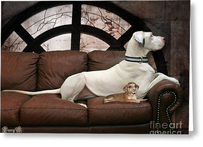 Catahoula Greeting Cards - Shelter Dogs Greeting Card by Terry Burgess