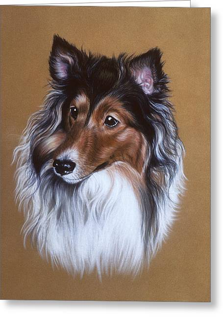 Curly Hair Pastels Greeting Cards - Sheltie Collie Greeting Card by Patricia Ivy
