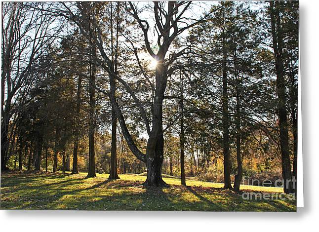 Peaceful Images Greeting Cards - Shine Through the Trees Greeting Card by Extrospection Art