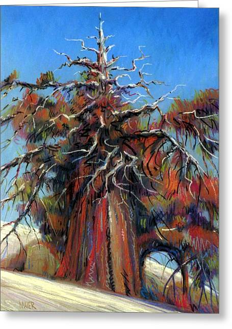 Snowed Trees Pastels Greeting Cards - Sierra Juniper Greeting Card by Donald Maier