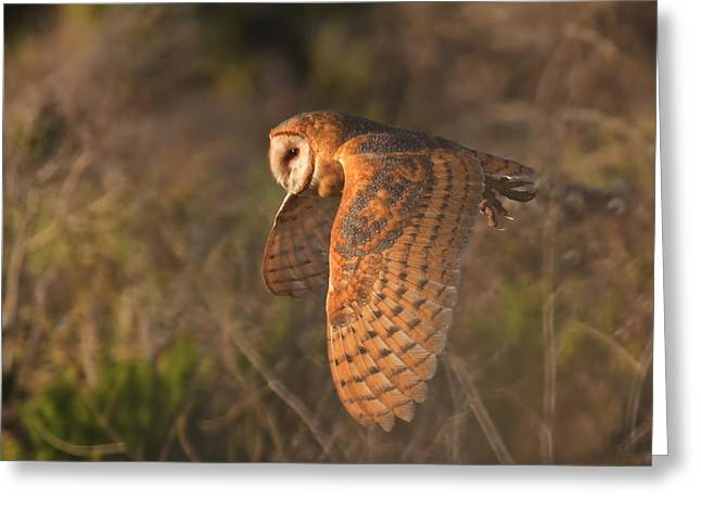 Preditor Photographs Greeting Cards - Silent Hunter Greeting Card by Beth Sargent