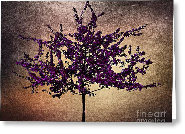 Fruit Tree Art Greeting Cards - Simplicity Greeting Card by Cheryl Young