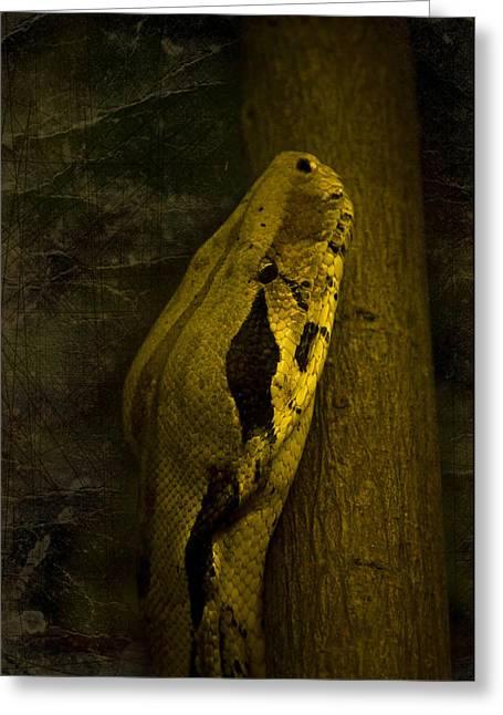 Svetlana Sewell Greeting Cards - Snake Greeting Card by Svetlana Sewell