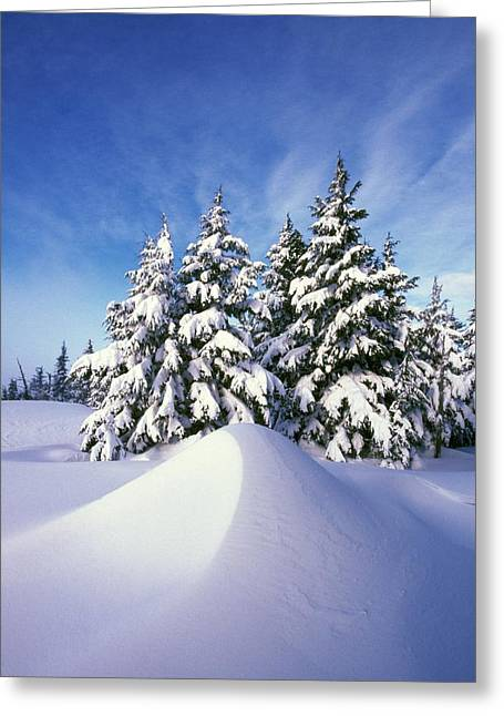 Snow-covered Pine Trees Greeting Card by Natural Selection Craig Tuttle