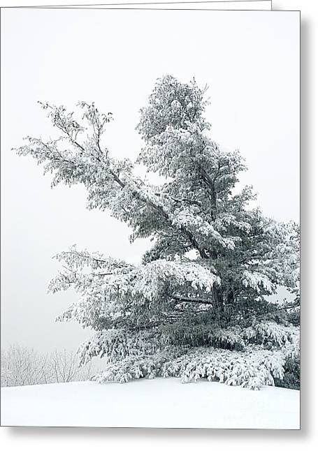 Snowfall Greeting Cards - Snow-covered Tree Greeting Card by HD Connelly