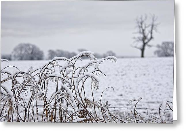 Bare Trees Greeting Cards - Snow Covered Trees And Field Greeting Card by John Short