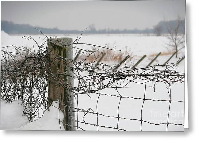 Border Photographs Greeting Cards - Snow fence  Greeting Card by Sandra Cunningham