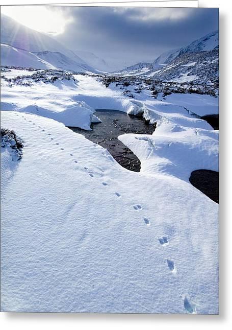 Snowy Landscape, Scotland Greeting Card by Duncan Shaw