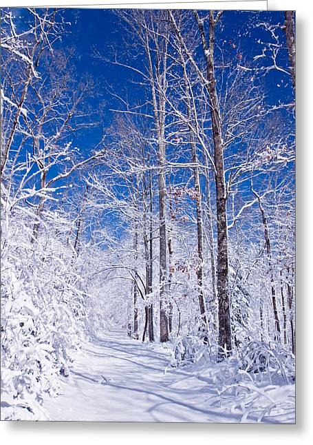 Forest Photographs Greeting Cards - Snowy Path Greeting Card by Rob Travis