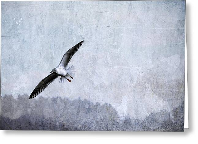 Soar Greeting Cards - Soaring Seagull Greeting Card by Carol Leigh