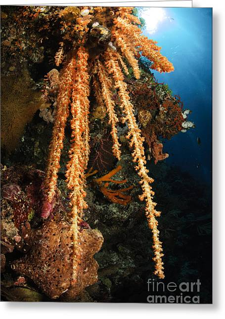 Undersea Photography Greeting Cards - Soft Coral Reef Seascape, Indonesia Greeting Card by Todd Winner