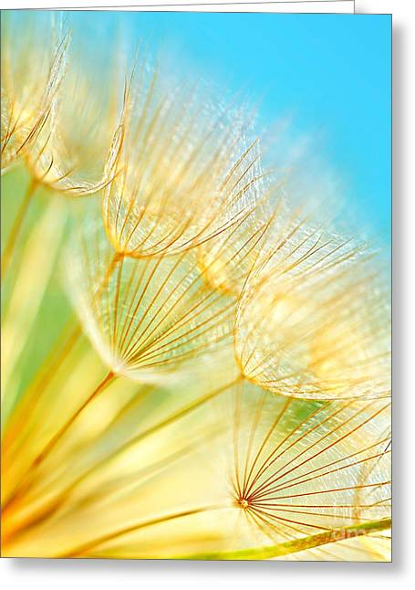 Wishes Greeting Cards - Soft dandelion flowers Greeting Card by Anna Omelchenko