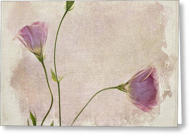 Pink Flower Greeting Cards - Softly Greeting Card by Rebecca Cozart