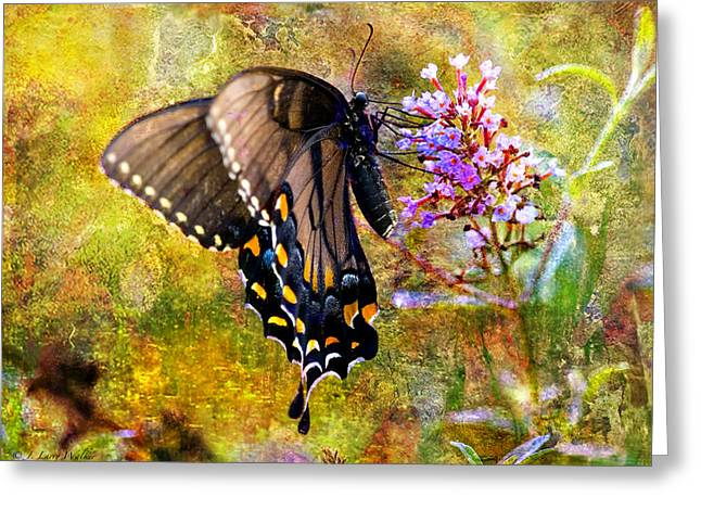 Butterfly Digital Art Greeting Cards - Spicebush Butterfly Looking Pretty Greeting Card by J Larry Walker