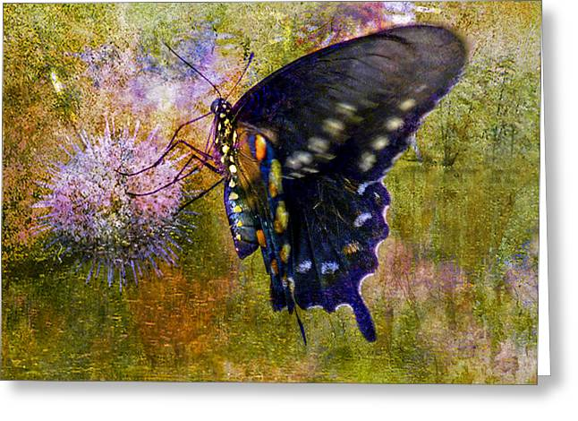 Butterfly Digital Art Greeting Cards - Spicebush Swallowtail Butterfly Greeting Card by J Larry Walker