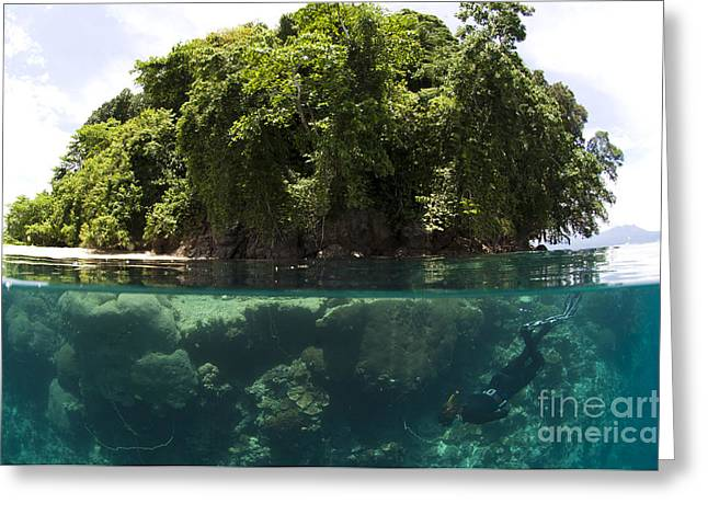 Kimbe Bay Greeting Cards - Split Level View Of Snorkeller Greeting Card by Steve Jones