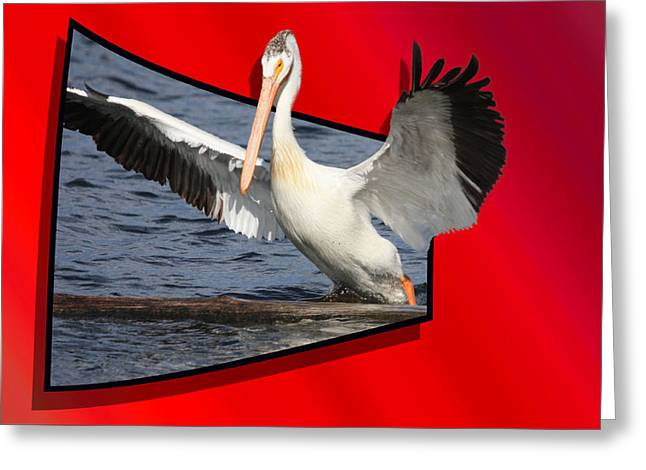 Pelican Landing Greeting Cards - Spread Your Wings Greeting Card by Shane Bechler