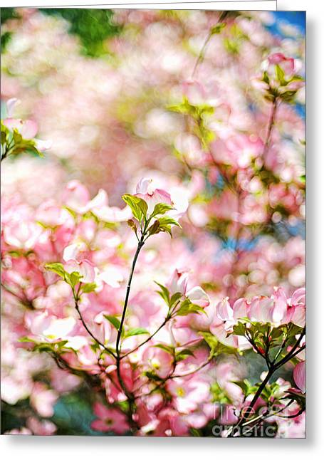 Pink Flower Branch Photographs Greeting Cards - Spring Blossoms Greeting Card by HD Connelly