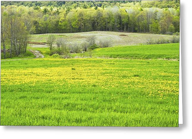 Maine Landscape Greeting Cards - Spring Farm Landscape With Dandelion Bloom in Maine Greeting Card by Keith Webber Jr