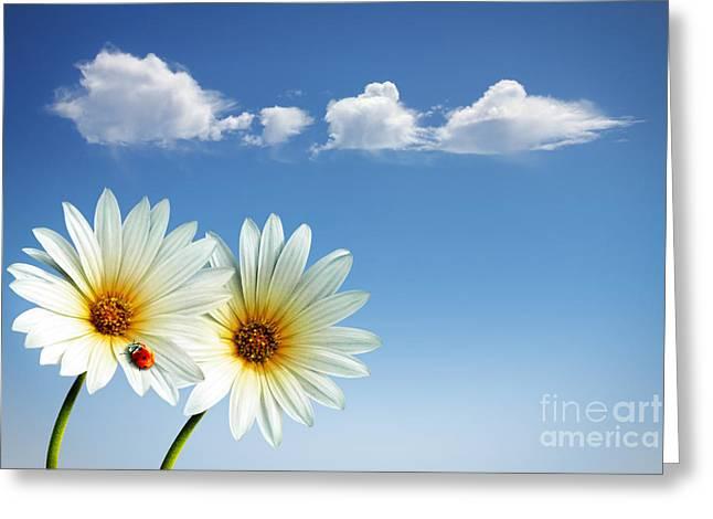 Spring Flowers Greeting Card by Carlos Caetano