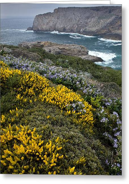 Rosmarinus Officinalis Greeting Cards - Spring Wildflowers, Portugal Greeting Card by Bob Gibbons