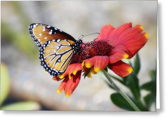 Queen Butterfly Greeting Cards - Springtime Greeting Card by Saija  Lehtonen