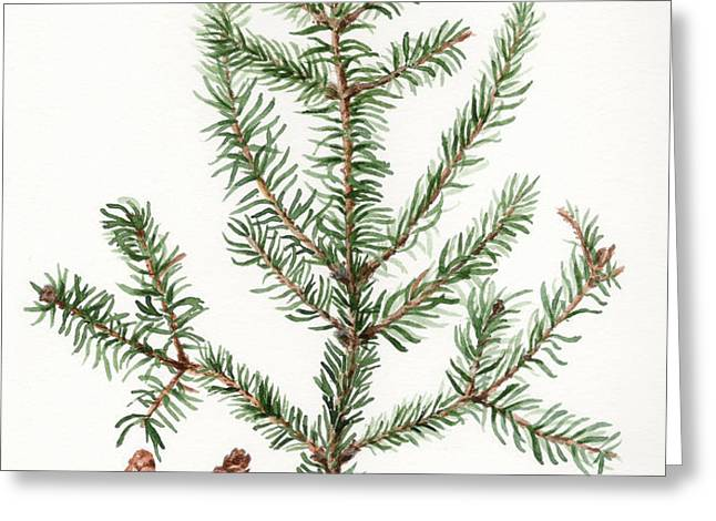 Spruce Twig Greeting Card by Betsy Gray Bell