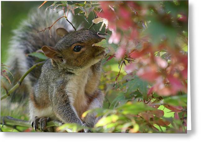 Little Pyrography Greeting Cards - Squirrel In Fall Greeting Card by Valia Bradshaw