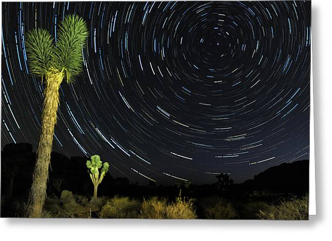 Star Trails In Joshua Tree Greeting Card by Dung Ma