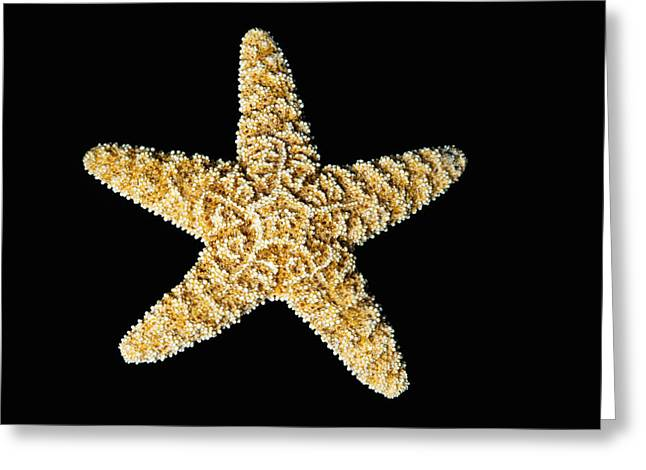 Asteroidea Greeting Cards - Starfish Greeting Card by Bill Brennan - Printscapes