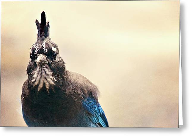 Stellers Jay Greeting Card by Lana Trussell