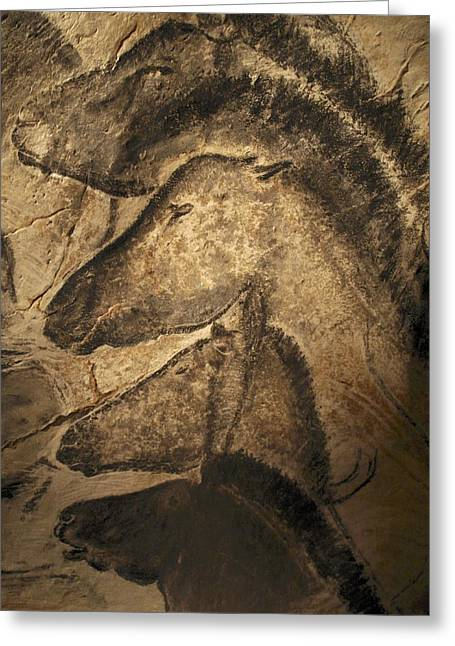 Caves Photographs Greeting Cards - Stone-age Cave Paintings, Chauvet, France Greeting Card by Javier Truebamsf