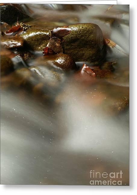 Sea Birds Greeting Cards - Stones in river Greeting Card by Odon Czintos